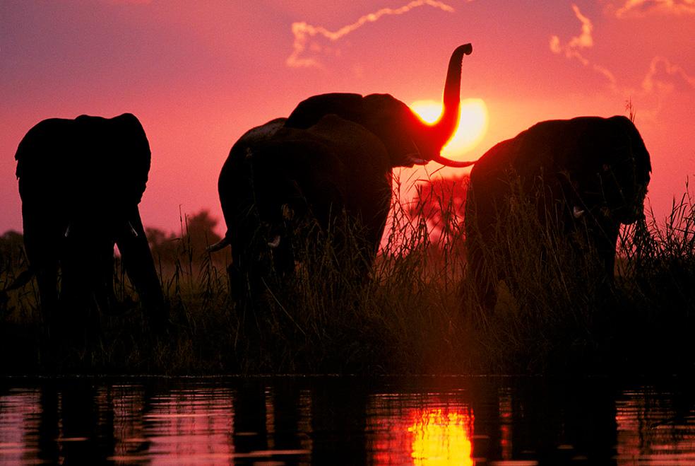 Elefantes en Amboseli.