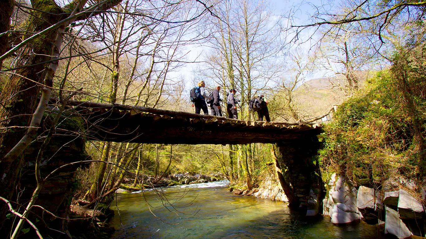 Puente en río bosque